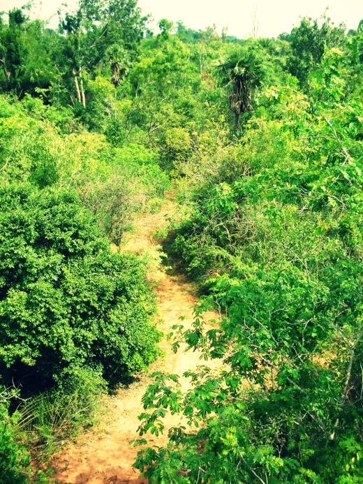 A view from above the canopy.